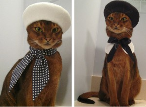 Cats in Berets Acupuncture Marketing