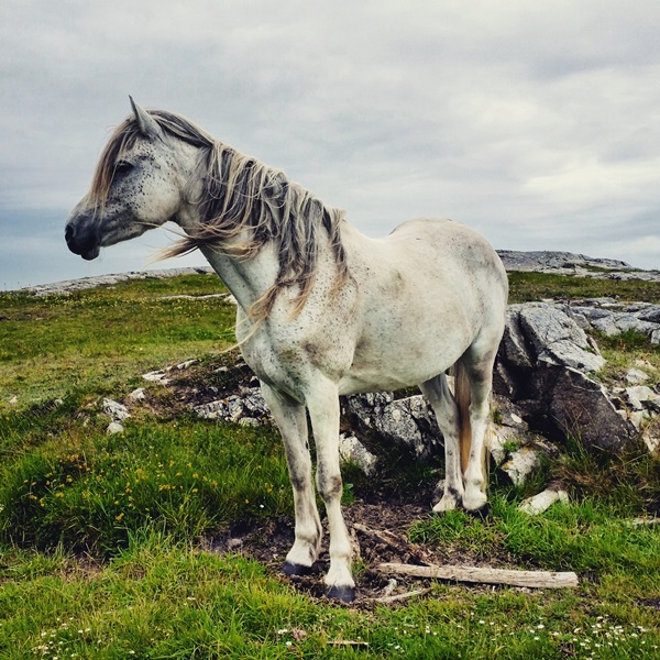 Photos from Diana's side trip to Ireland after Module 3 of the Dermatology Diploma Course this June: This pony in the Connemara region of Ireland loved posing for my camera.
